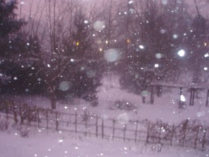 """""""Blizzard"""" of 08"""